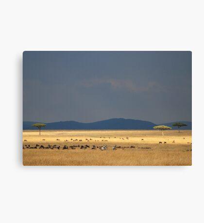 masai mara Canvas Print