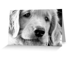 Ultimitely Adorable Greeting Card
