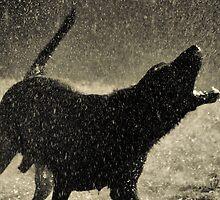 I'm Singing In The Rain by Carla Jensen