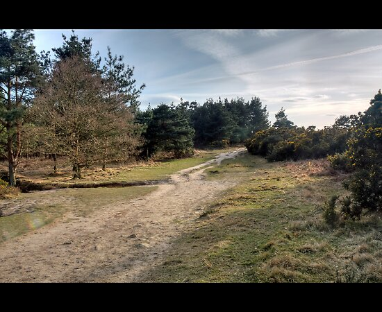 Up to Gills Lap, Ashdown Forest, Sussex by Craig Williams