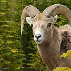 Big Horn by Dyle Warren