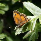 Bronze Butterfly (2) by AnnDixon