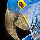 Watch the Birdie!  by Lyndy