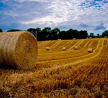 Rolling Bales by Peter  Daly