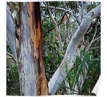The Gum Tree Poster