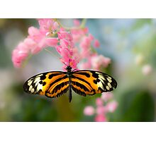 Impressionistic Longwing Photographic Print