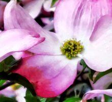 Pink Dogwood Blossoms Sticker
