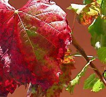 Autumn on the Vine by Ian Ker