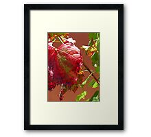 Autumn on the Vine Framed Print