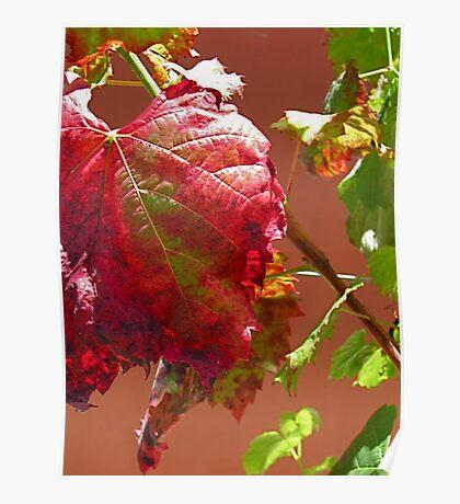Autumn on the Vine Poster