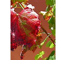 Autumn on the Vine Photographic Print