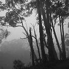 Misty Trees in Mono by pennyswork