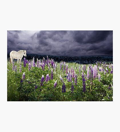 A Childs Dream of Lupine Fields Photographic Print