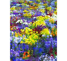 Pansy Party Photographic Print