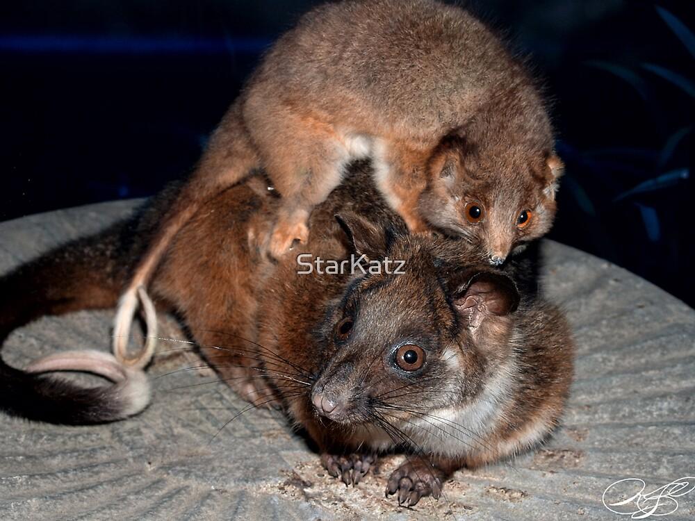 Joy Rider - Possums on the bin by StarKatz