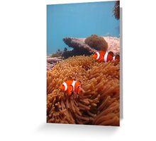 fish nemo Greeting Card