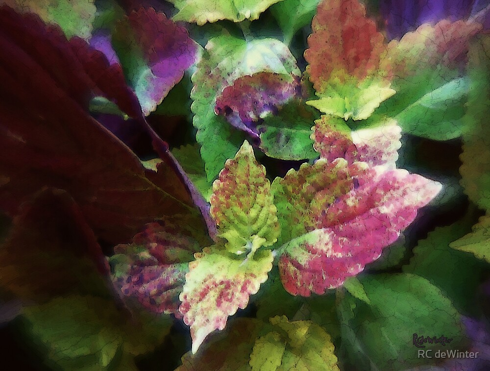 Who Needs Flowers? by RC deWinter
