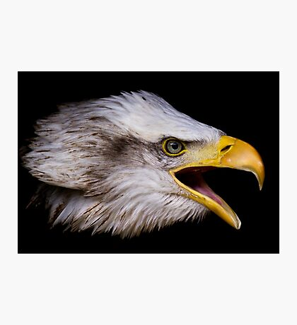 Liberty Eagle Photographic Print