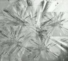 glass flower layers - monochrome by fotochic