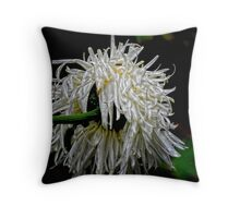 Tatty Bogel from behind. : ) Throw Pillow