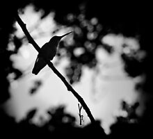 Hummingbird at Twilight by Corri Gryting Gutzman