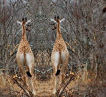 DIGITAL IDENTICAL TWINS - THE GIRAFFE - Camelopardalis (KAMEELPERD) by Magaret Meintjes