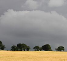 Corn Field Under Promise of Rain by Lynn Ede