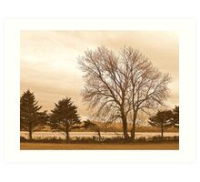 Trees In Sepia......................................Most Products Art Print