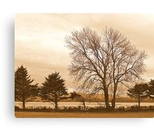Trees In Sepia......................................Most Products Canvas Print