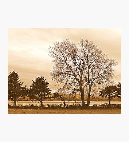 Trees In Sepia......................................Most Products Photographic Print