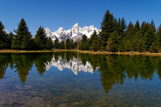 Midday Calm at Schwabacher Landing by Stephen Beattie