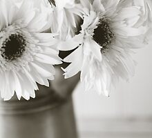 Spring Daisies in Black and White by Melinda Anderson
