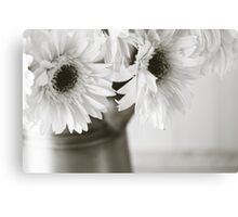 Spring Daisies in Black and White Canvas Print