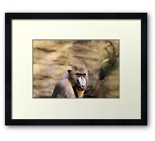 Who is looking at who??? Framed Print