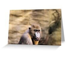 Who is looking at who??? Greeting Card