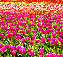 For The Love Of Tulips by Tamela J Wolff