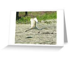 Egret flying over water Greeting Card