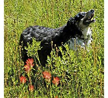 Buddy says, Hey Uncle Denny I found Indian Paintbrushes! Photographic Print