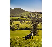 Fields and Sheep! Photographic Print