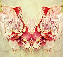 Two Sides of the Same Flower by Scott Mitchell