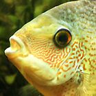 Green Severum by Jane McDougall