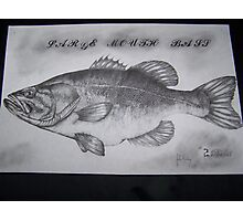 LARGEMOUTH bass in #2 pencil Photographic Print