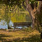 A Shady Spot by Barb White