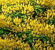 The Yellow Gift of Nature by Nira Dabush