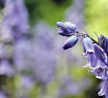 Bluebells in my garden by Astrid Ewing Photography