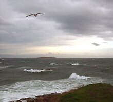 Stormy Clover Point by summerart
