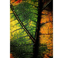 living dead leaf Photographic Print