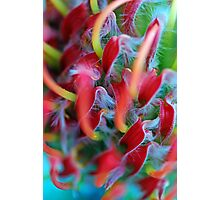 Red Ribbons Photographic Print