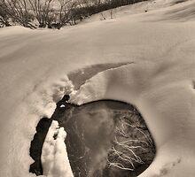 Bogong High Plains by Kevin McGennan