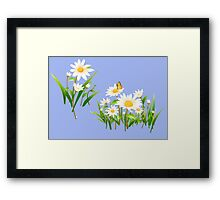White cute daisies Framed Print
